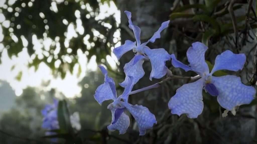 orquídea guerlain dubai vivir en español