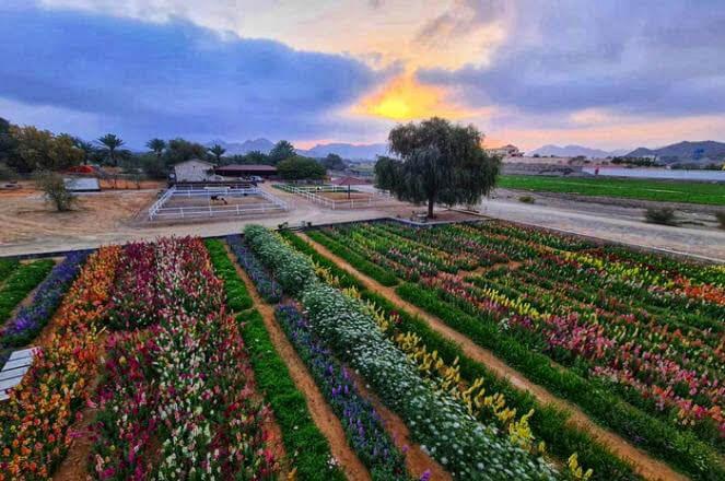plantación flores EAU