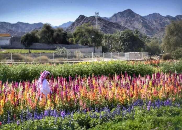 granja flores emiratos plantación vivir