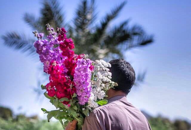 vivero flores vivir dubai