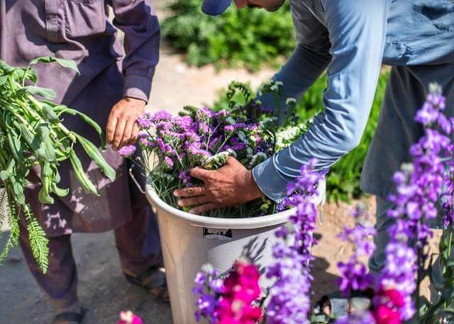 granja flores wadi asimah