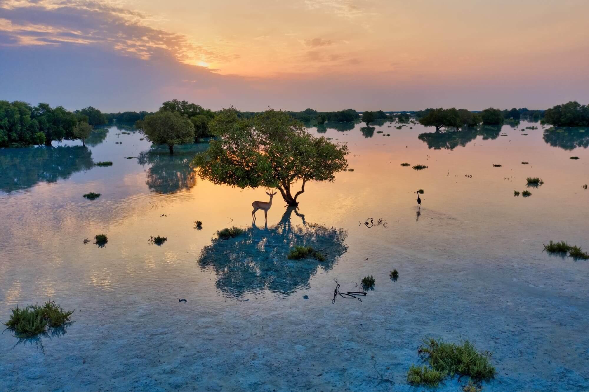 mangrove park abu dhabi animales emiratos