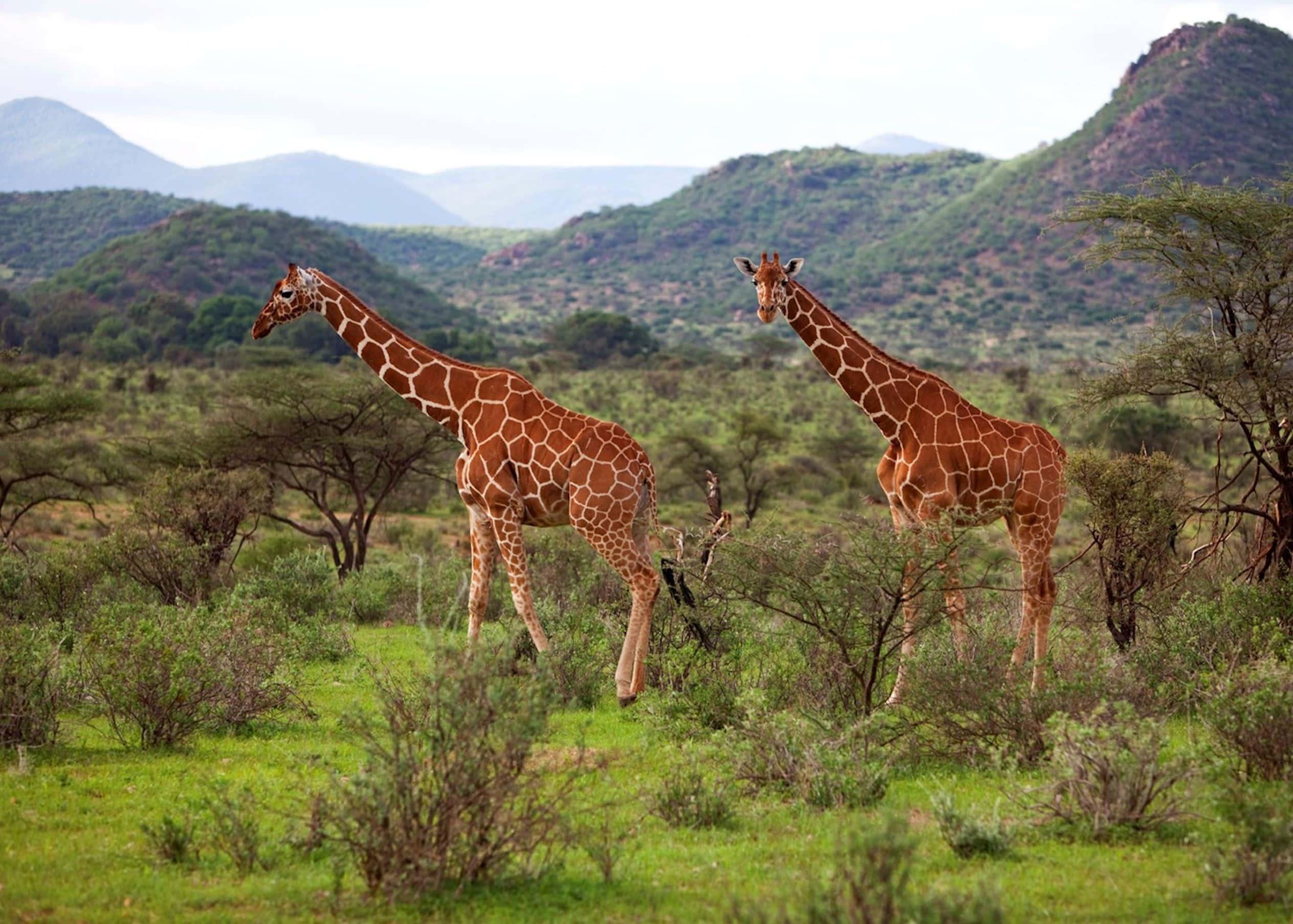 viajar kenya emiratos eau